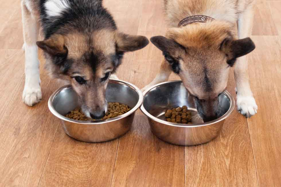 two dogs having their food from bowls