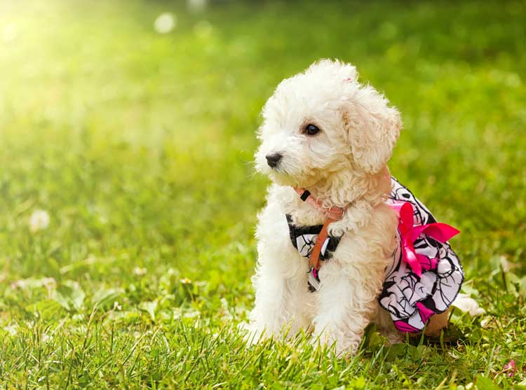 puppy wearing a cute outfit resting on the grass