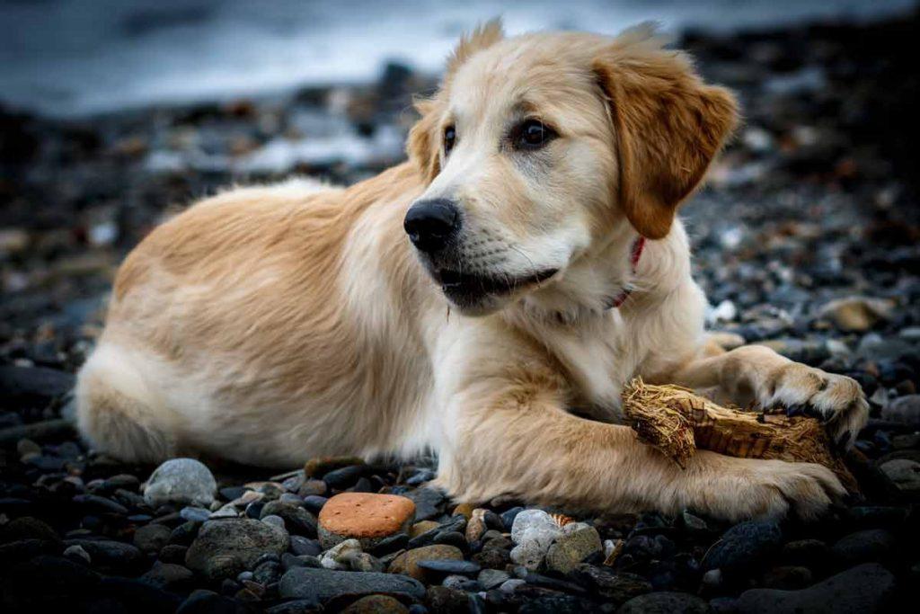 a dog resting on rocks